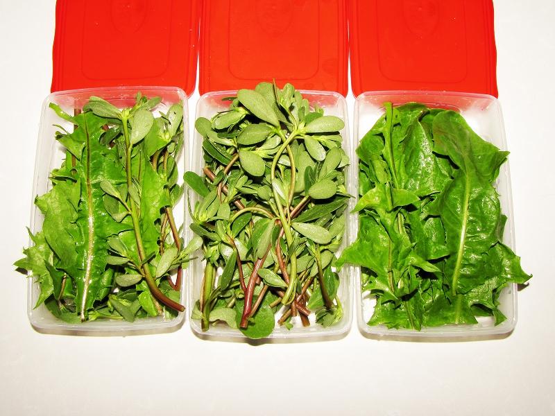 Hierbas para mi ninfa el mundo de j a - Vitaminas para plantas de interior ...
